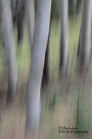 Aspens-Panned-5355