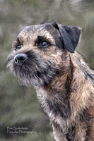 Border Terrier-Oil Painting