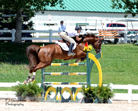 Chestnut Jumper-8x10-3363