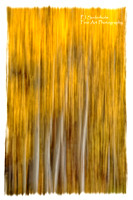 Aspens-panned-9388